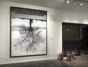 Rodney Graham, Black Cottonwood Tree, Spanish Banks Tree, 2012, Transmounted monochromatic C-print